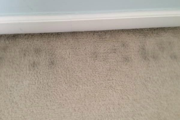 How do I get rid of the black lines around the edge of my carpet?
